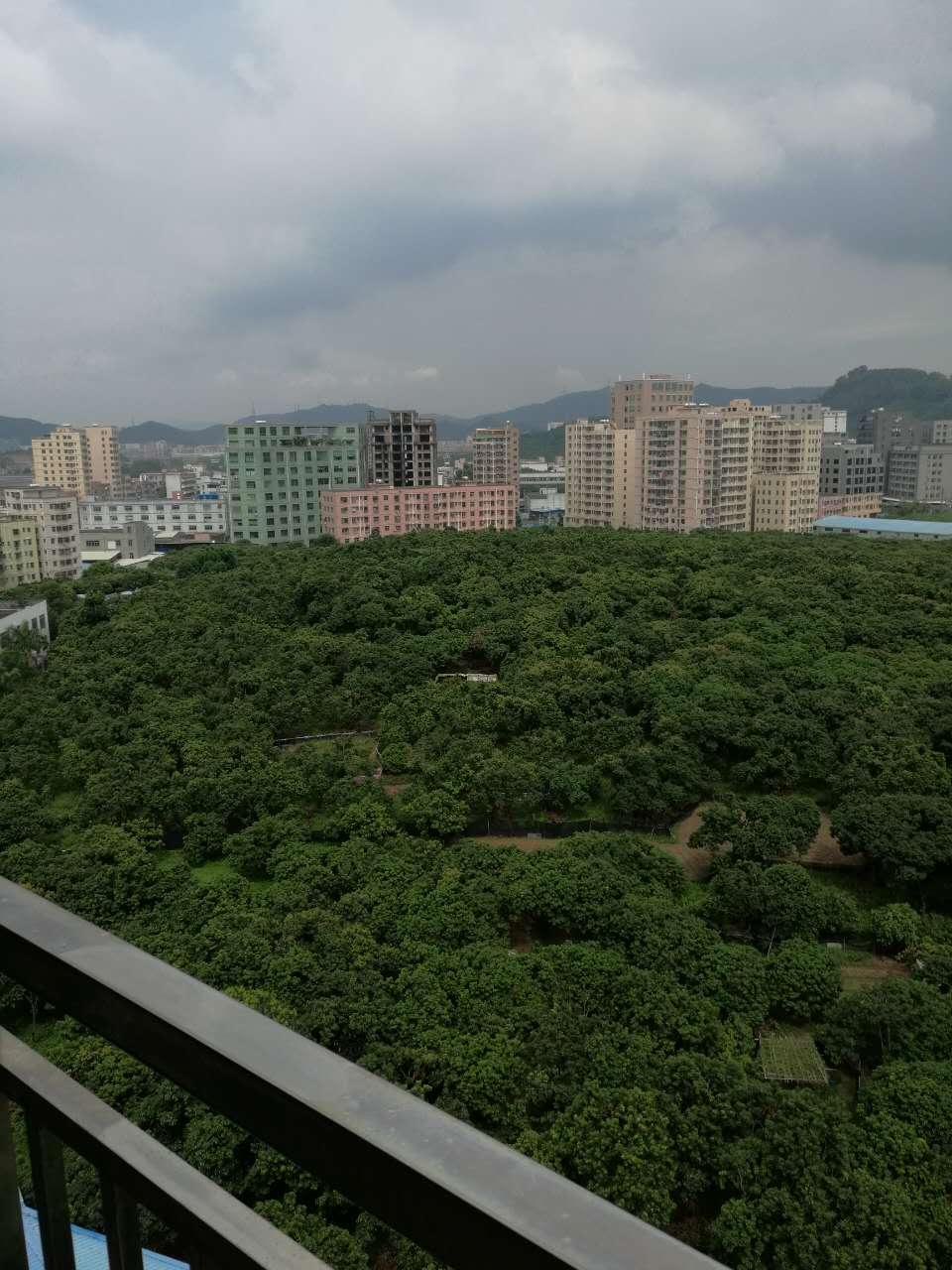 深圳公明楼村小产权房新开盘对外发售,3600元/㎡起 房价 新闻 跳蚤市场 二房二厅 第11张